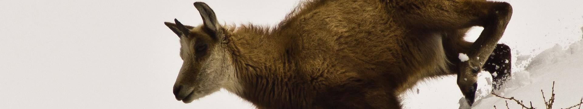 animaux-parc-01-8878