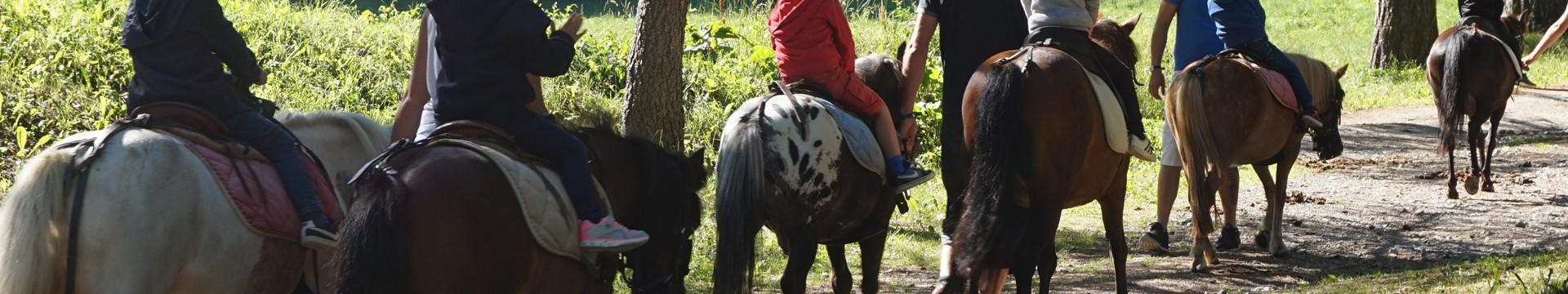 chevaux-ete-9186