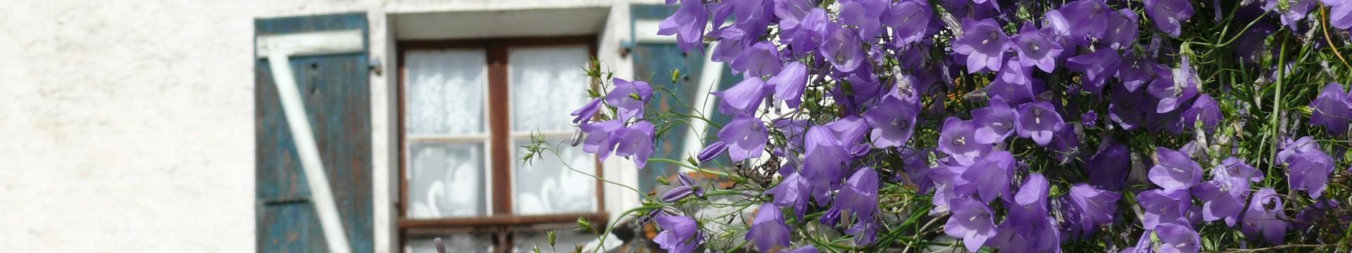 fleurs-et-volet-9334