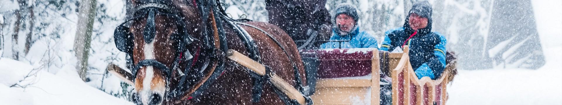 traineau-cheval-01-8850