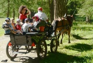 """Riding stable """"Le Fer à Cheval"""""""