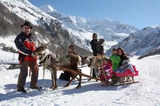 Balades avec les rennes du Grand Plan