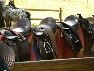 Esel und Pferde