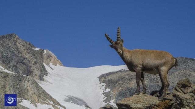Nationalpark Vanoise