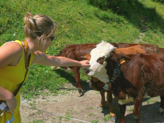 alpine summer life & tarine herds