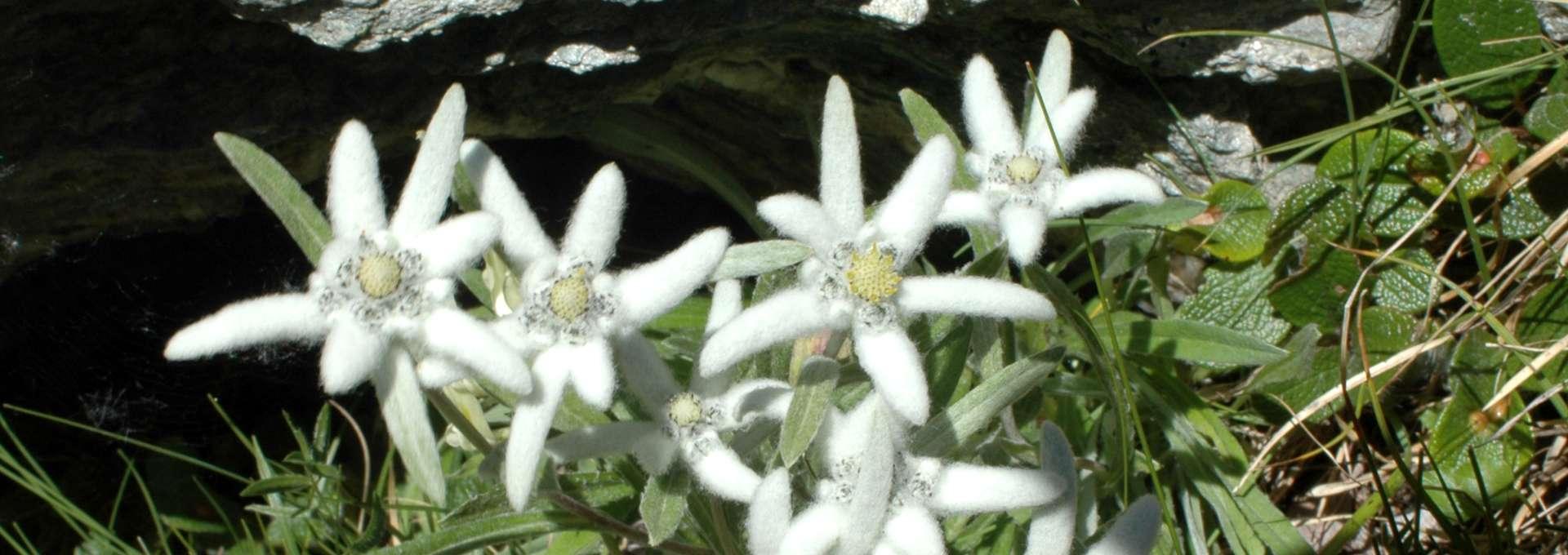 edelweiss-peisey-vallandry-658