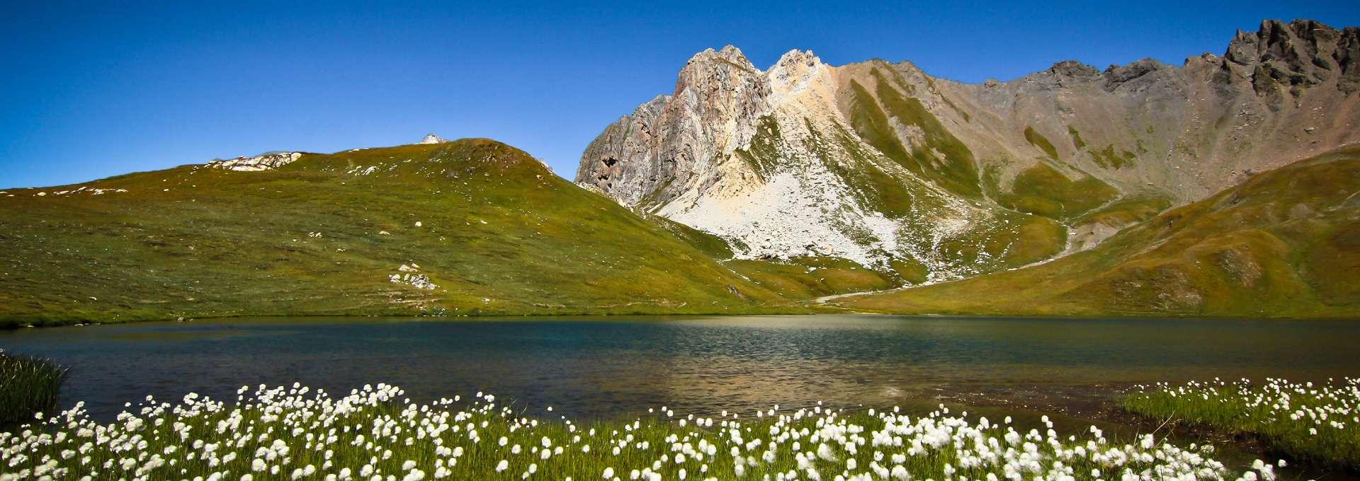 Lac de montagne � linaigrette