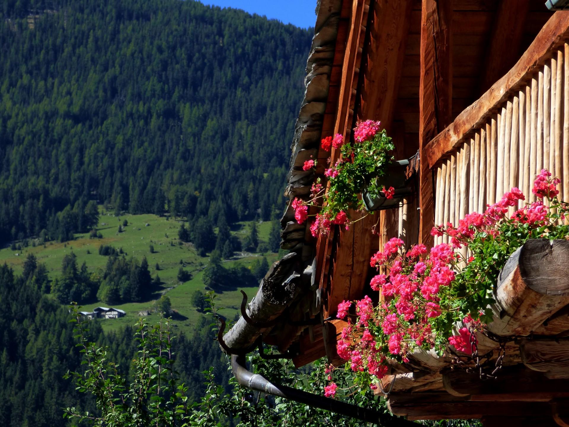 sejournez-dans-une-destination-authentique-nancroix-fleuri-peisey-vallandry-1532