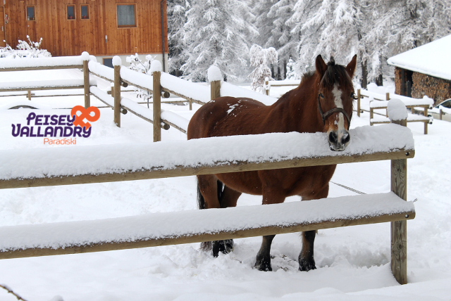 cheval-et-neige-1103