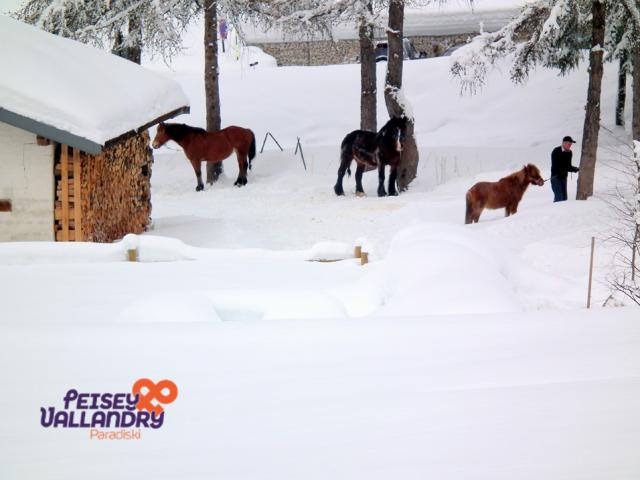 chevaux-hiver-1104