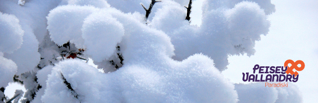 neige-fraiche-sur-argousier-1029