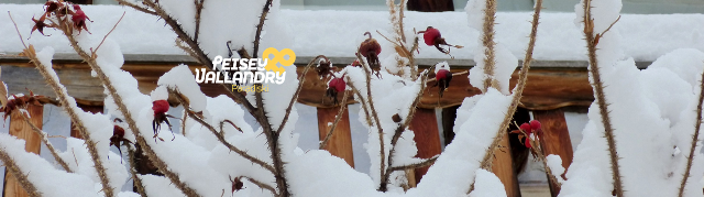 neige-sur-eglantine-1028