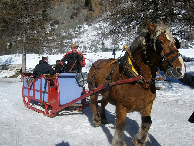 peisey-vallandry-activite-fer-a-cheval-traineau-3-1248
