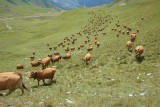 Alpage Rossets