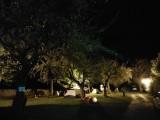 Landry-verger-camping-canopée-83554