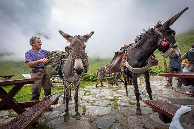 Refuge entre-le-lac : Francis et ses ânes