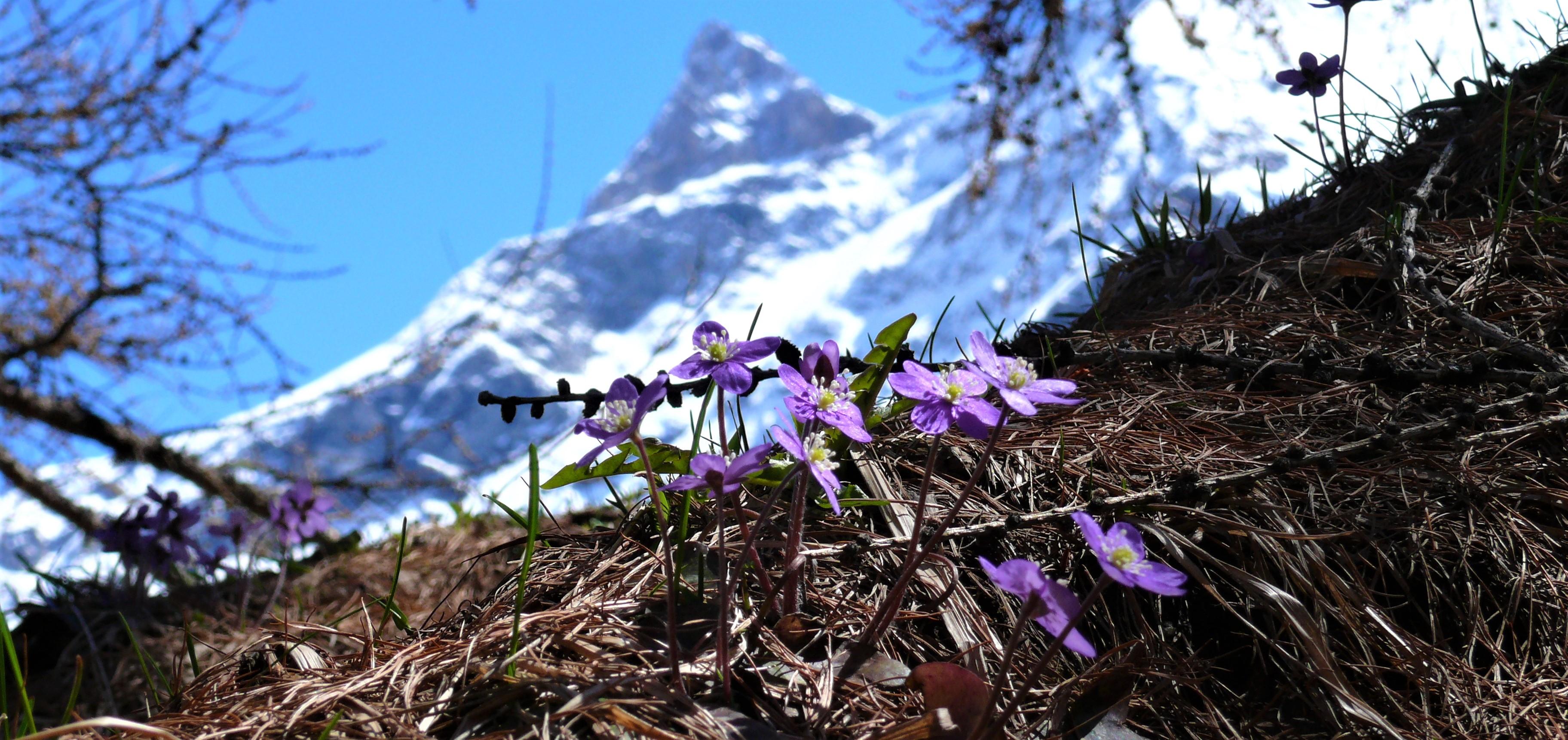 fleurs-trinité-avril-beaupraz-54052