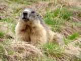 truites-et-marmottes-peisey-vallandry-2-54020