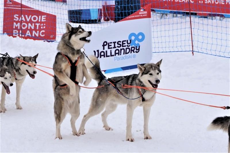 grande-odyssée-2021-chiens-59631